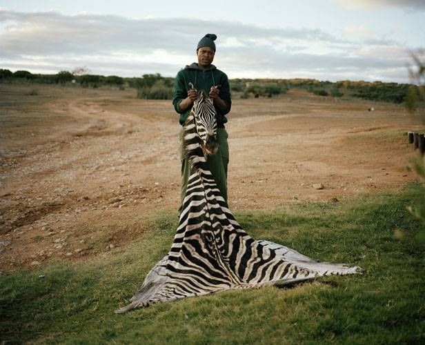 skinner with trophy zebra, south africa