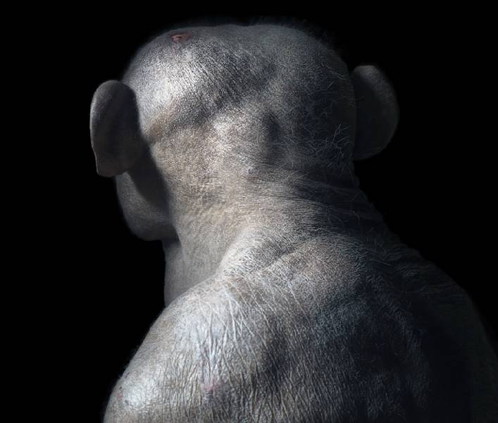 tim-flach_more-than-human_01
