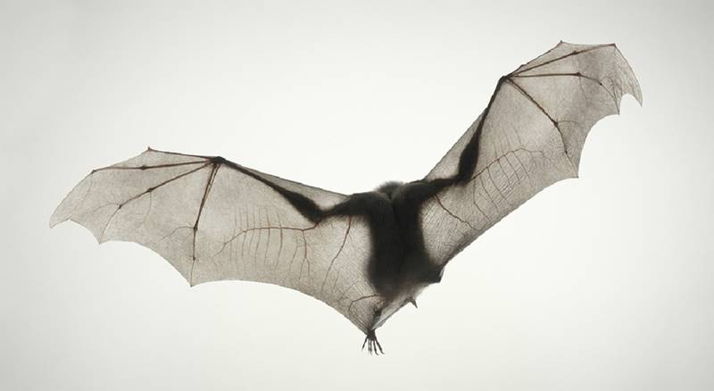 tim-flach_more-than-human_02
