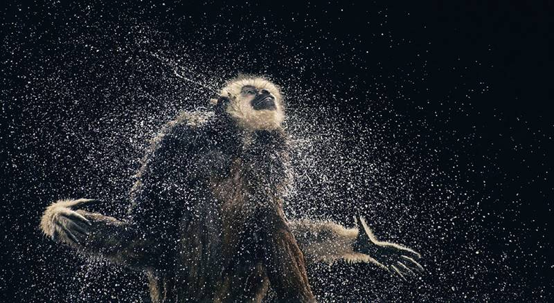 tim-flach_more-than-human_04