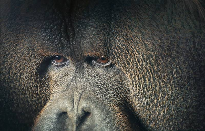 tim-flach_more-than-human_05