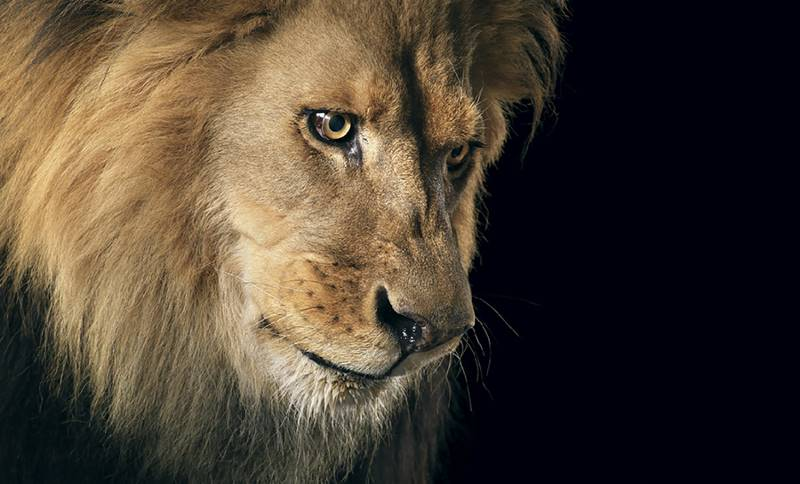 tim-flach_more-than-human_09