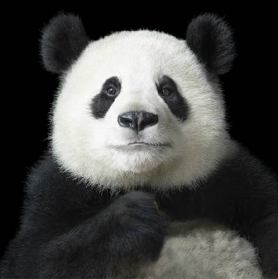 tim-flach_more-than-human_12