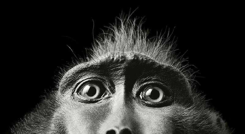 tim-flach_more-than-human_16