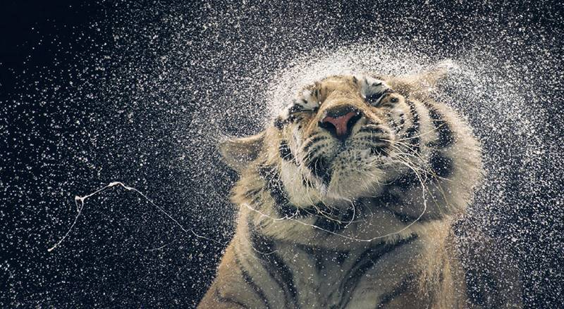 tim-flach_more-than-human_17
