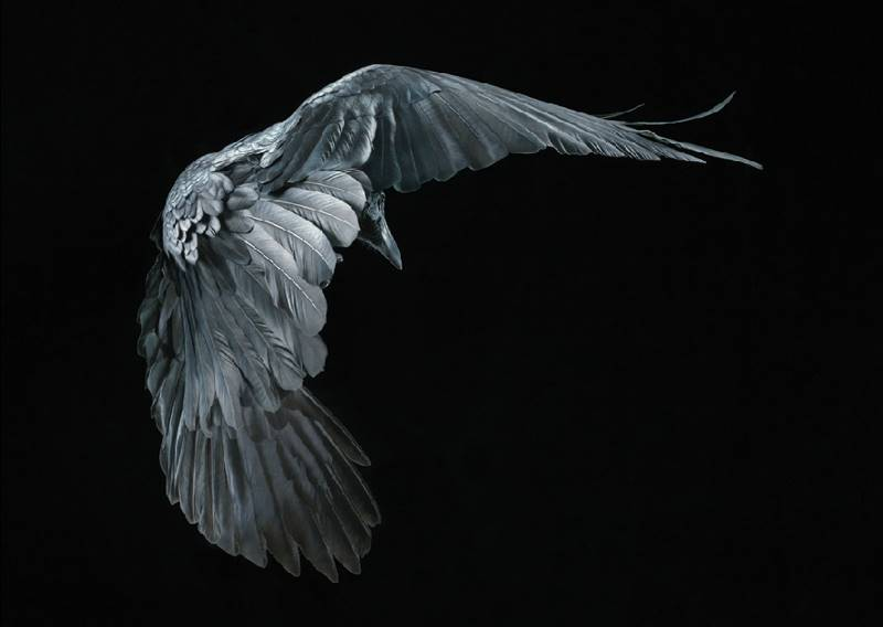 tim-flach_more-than-human_19