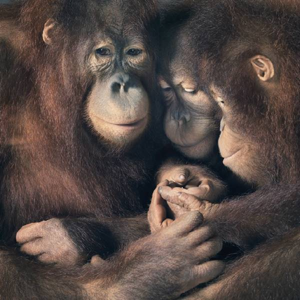 tim-flach_more-than-human_22
