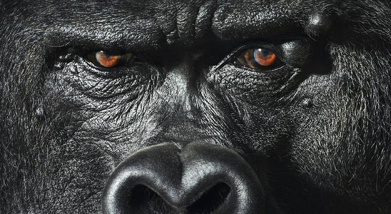tim-flach_more-than-human_24
