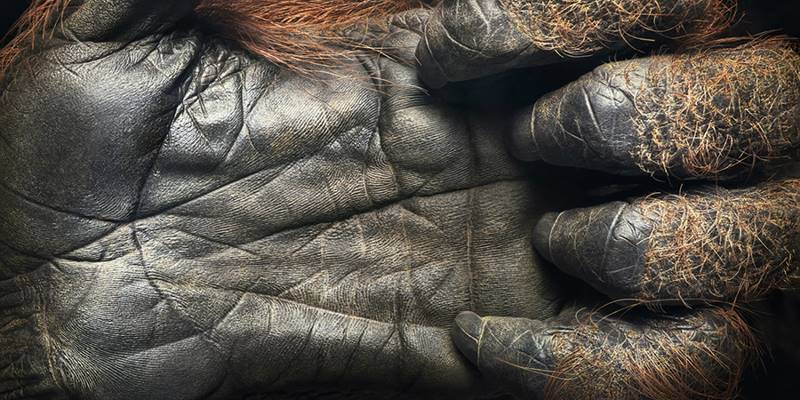 tim-flach_more-than-human_25