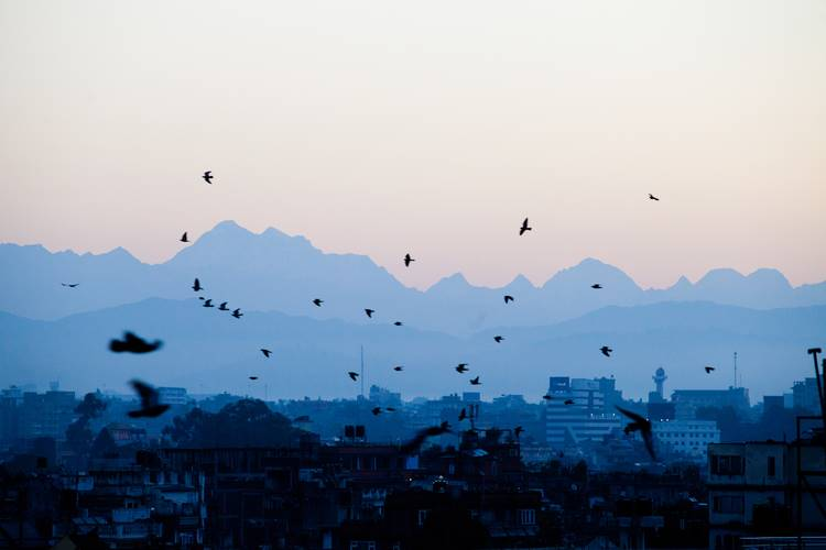Birds take flight at sunrise with the Himal Ganesh as a backdrop.