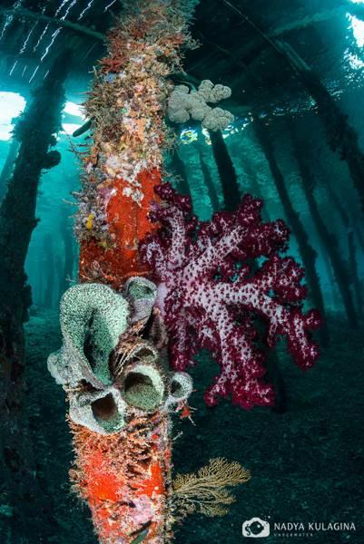 wrecked-underwater-16