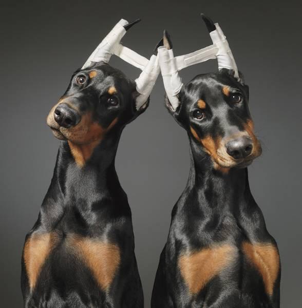 tim-flach_dogs-06