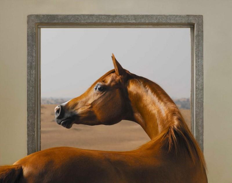 tim-flach_equus-03