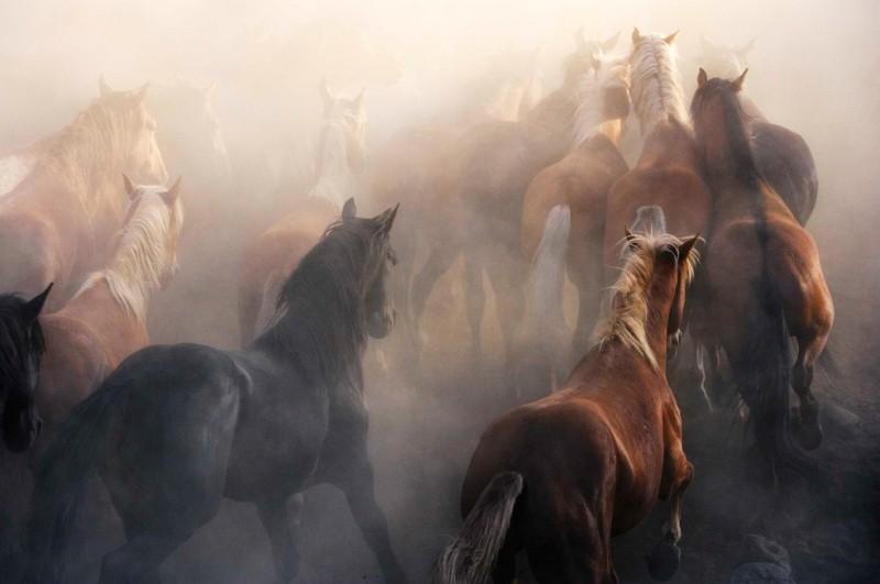 tim-flach_equus-11