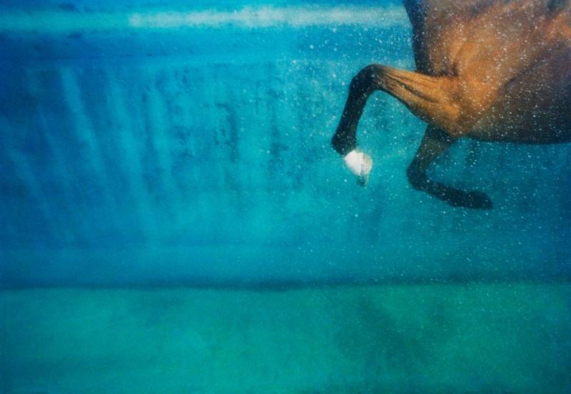 tim-flach_equus-12