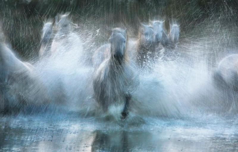 tim-flach_equus-14