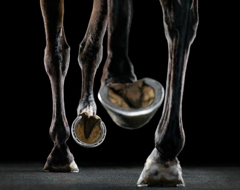 tim-flach_equus-16