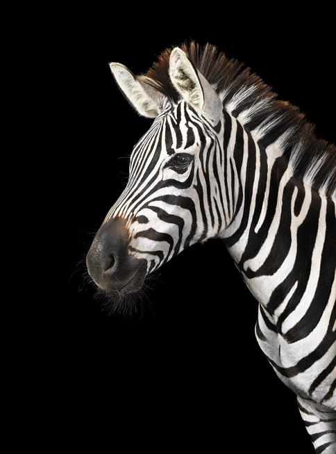 tim-flach_equus-18