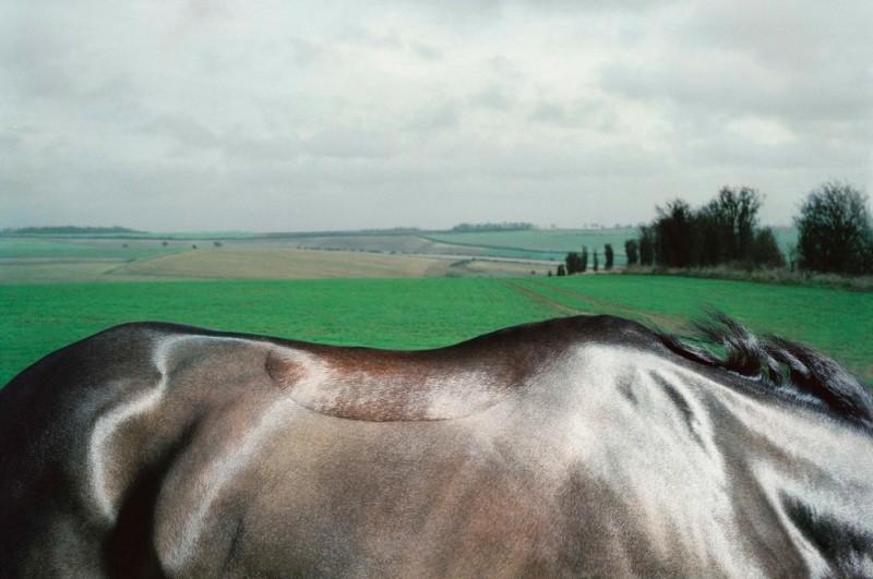 tim-flach_equus-20