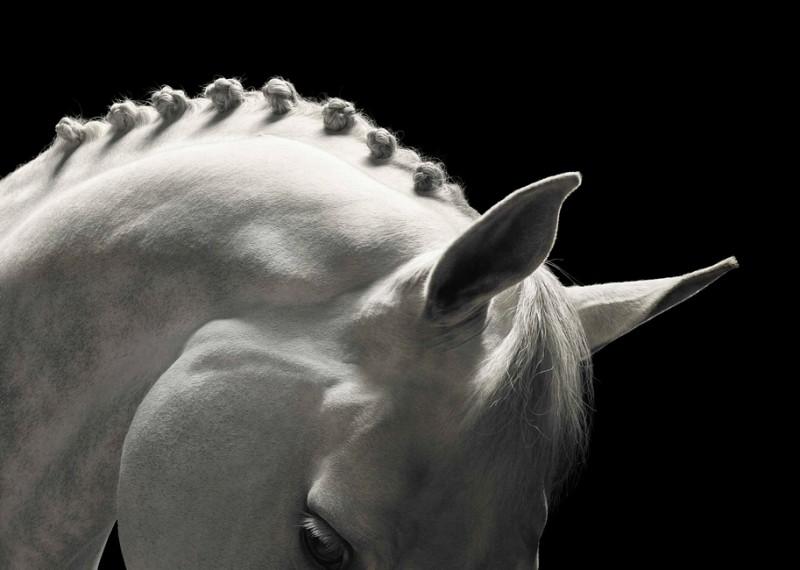 tim-flach_equus-21