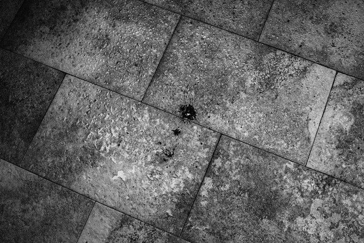 fabio-miguel-roque-07